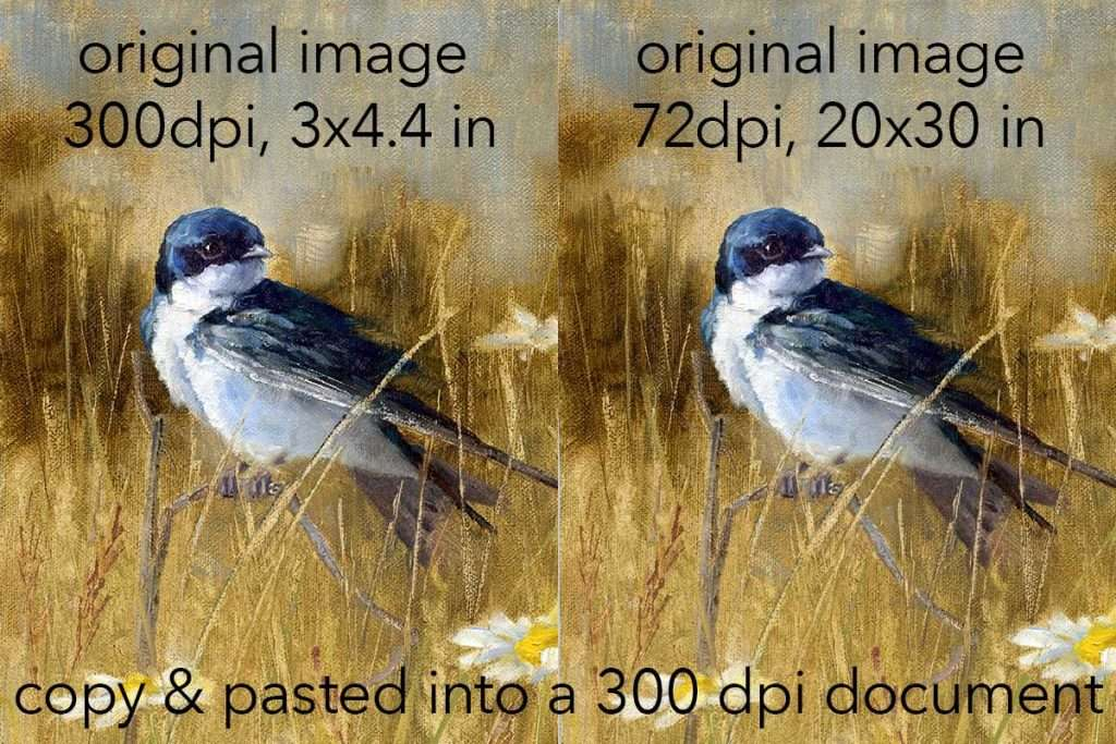 Side by side comparison of a small High Res image next to a large size Low Res image taken with a cellphone and reduced to the same size.